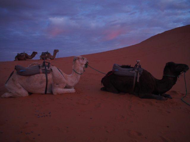 サハラ砂漠 日の出 持ち物 04