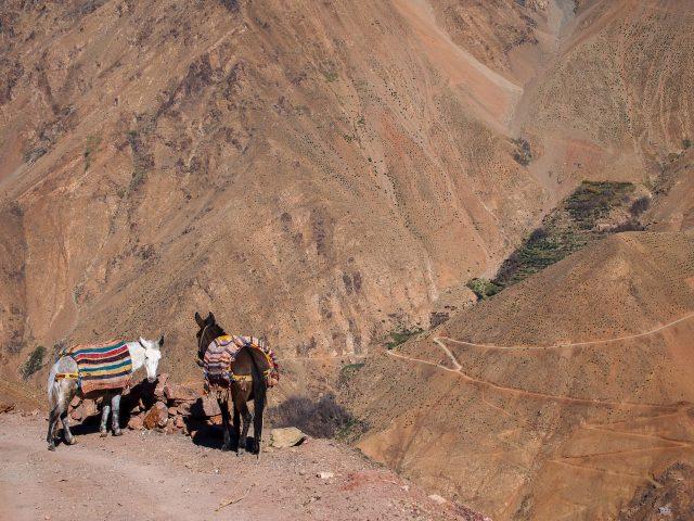 モロッコ 治安 一人旅 05