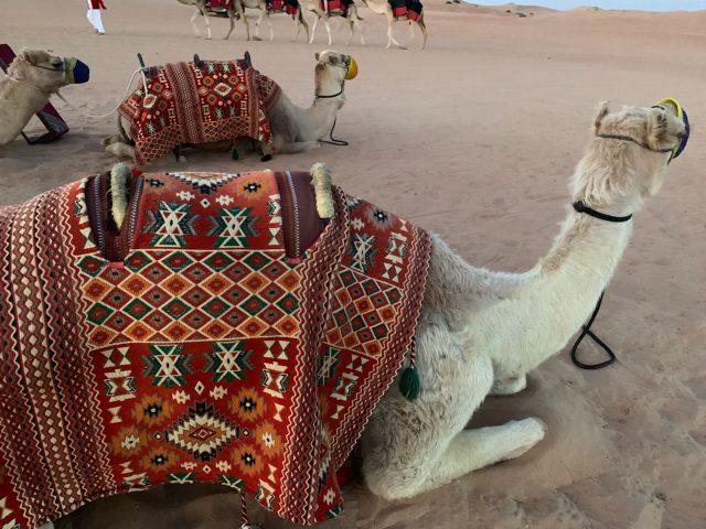 """dubai_desert-safari-12"""""""""""