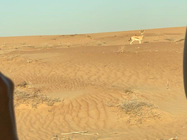 """dubai_desert-safari-4"""""""""""
