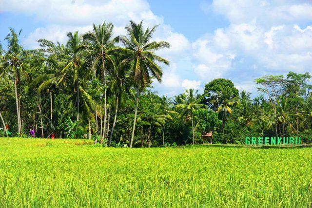 """Bali_Ubud_GreenKubuCafe_1"""""""""""