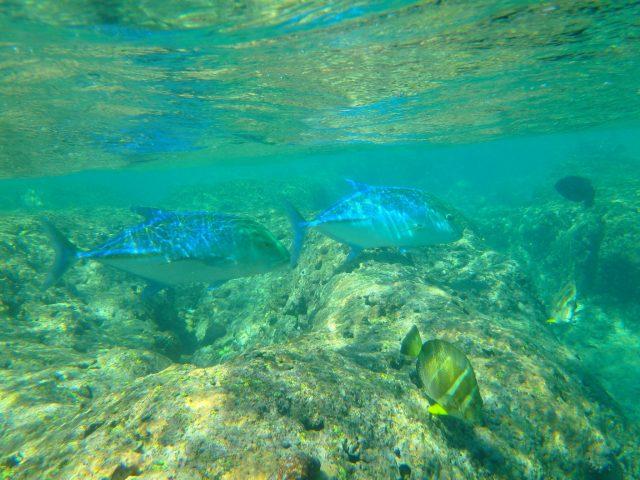 ハナウマ湾水中