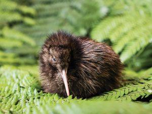 カフェ、観光、フォトジェニック!週末+αで満喫できるニュージーランドの魅力