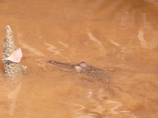 "BRUNEI_Mangrove-river-safari_3"""""