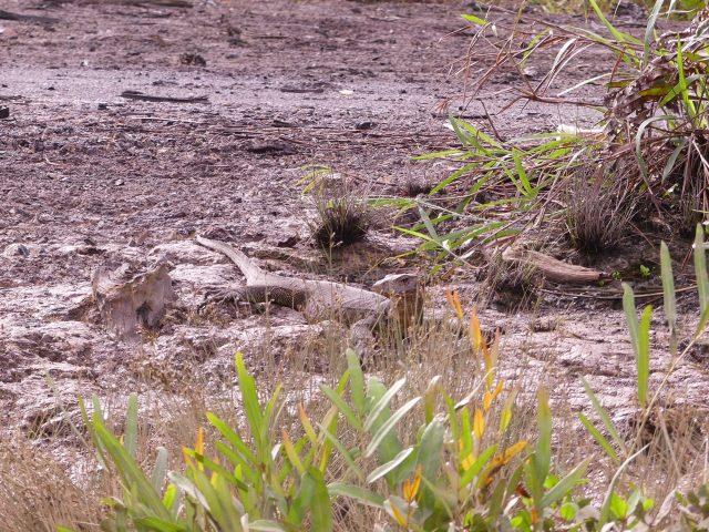 BRUNEI_Mangrove-river-safari_9