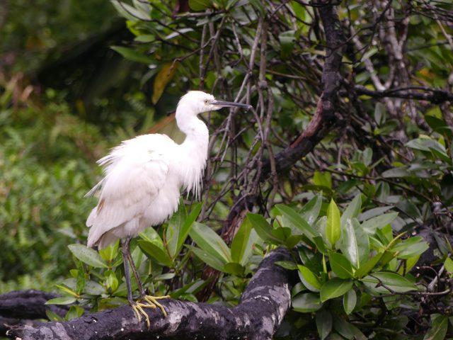 "BRUNEI_Mangrove-river-safari_10"""""