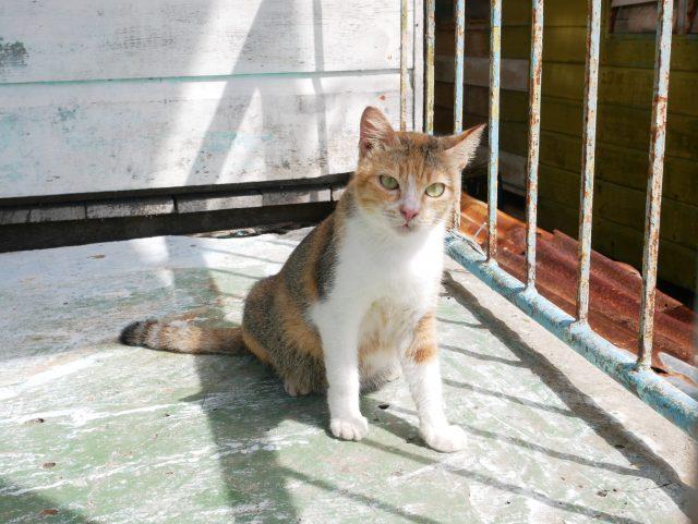 """BRUNEI_Kampong-Ayer_cat"""""""""""