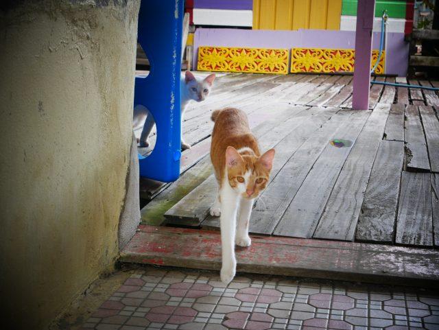 """BRUNEI_Kampong-Ayer_cat3"""""""""""