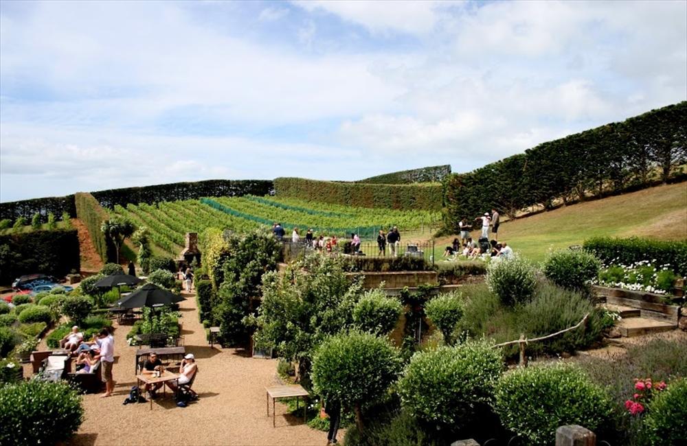 ワイヘキ島のワイン畑