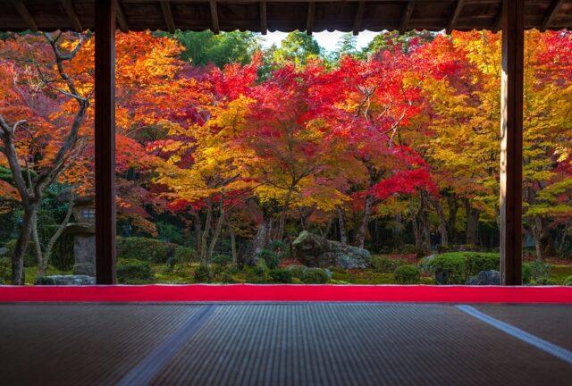 日本が誇る【京都 絶景】おすすめスポット17選~夜間ライトアップの名所も~