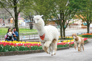 栃木【那須】で動物と触れ合えるおすすめ観光スポットを厳選