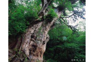 世界遺産【屋久島】で絶対訪れたい!観光スポット13選とマップ、移動方法や所要時間