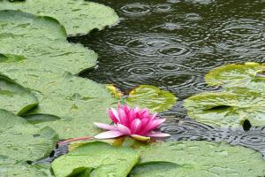 2021年【沖縄の梅雨明けはいつ?】雨でも沖縄を満喫~時期や雨の特徴、服装まで徹底解説~