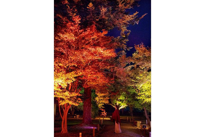 元離宮二条城 紅葉写真ライトアップ